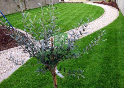 Garden Design Cambridge 176